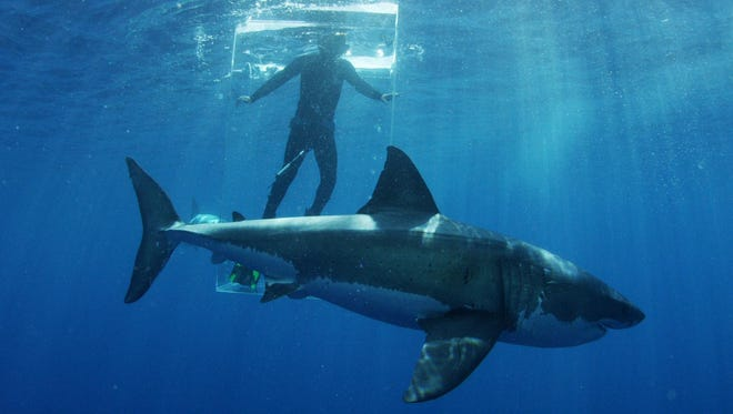 Discovery Channel's 30th annual Shark Week included 19 hours of prime-time programming in July 2018 and wowed 34.9 million viewers.