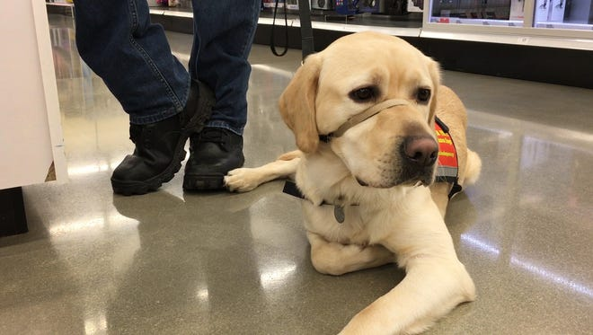 John Minich of Fremont first met his new service dog, Delmar, two weeks ago after picking up the 18-month-old golden Labrador retriever from Freedom Paws Assistance Dogs in Marysville.