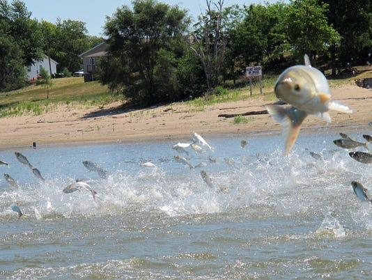 stc 0328 asian carp_filer 1.jpg