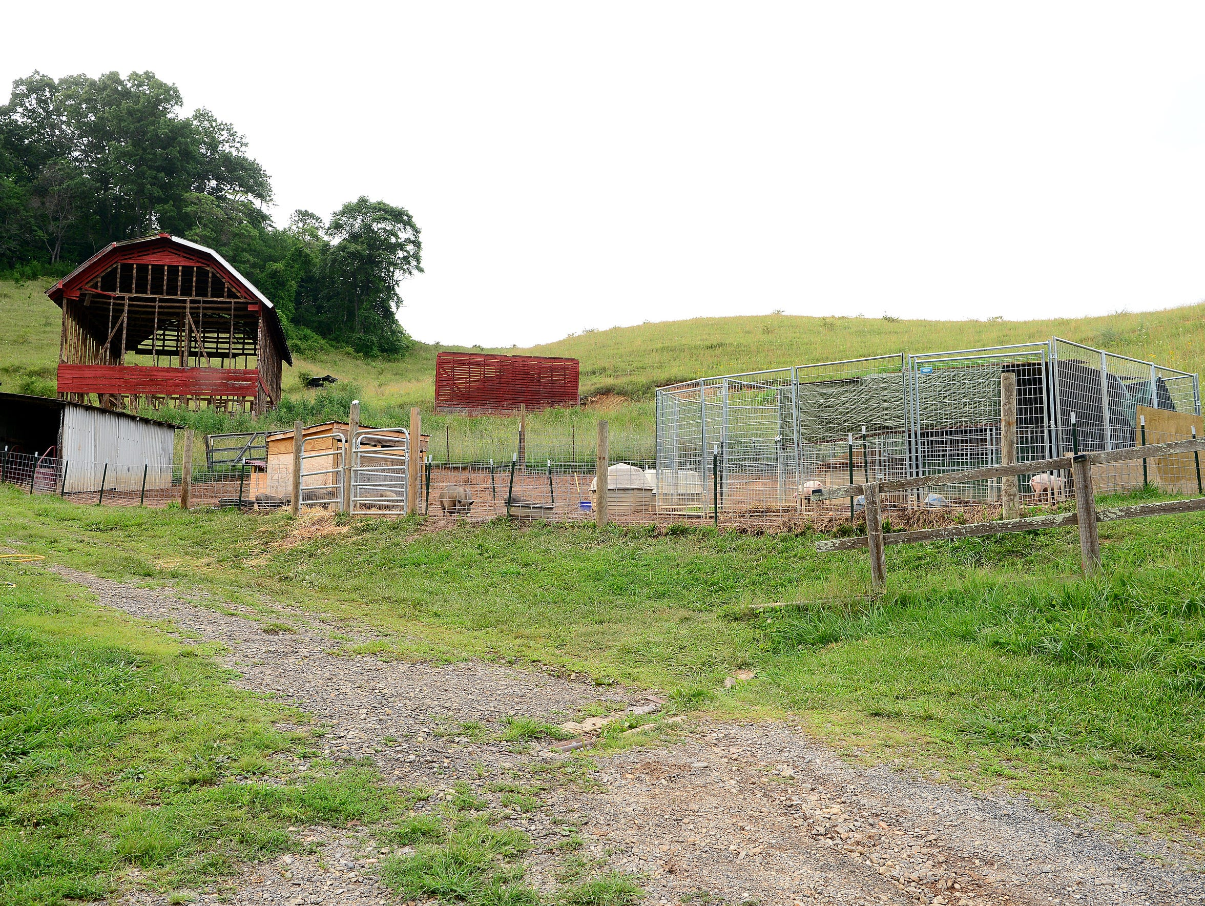 Pigs are housed in pens on the Brother Wolf Animal