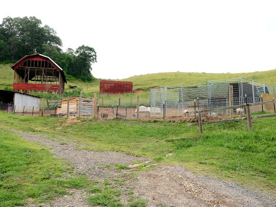 Pigs are housed in pens on the Brother Wolf Animal Sanctuary in Leicester on Thursday, July 6, 2017. The animal rescue is in the process of expanding and moving all of their operations there.