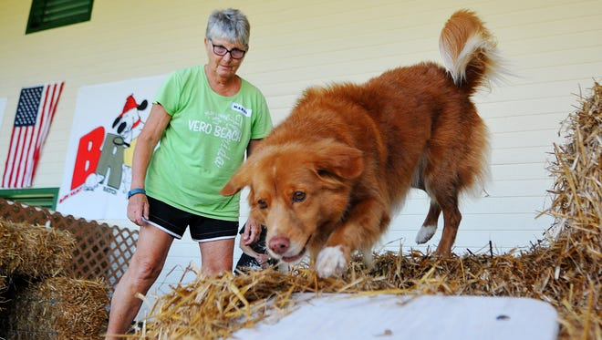 Mardie Smith of Vero Beach with her dog Ribbon, a Nova Scotia Duck Toller. Ribbon searches for two rats during the Barnhunt Ratch Society class held at the Wickham Park Pavilion in Melbourne.