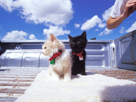 Baby kittens standing in truck bed
