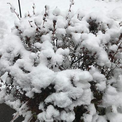 Snow in East Brunswick.