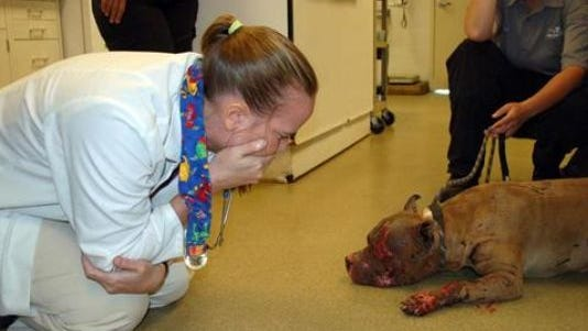 [NOTE: This photo, courtesy of the Humane Society of Missouri, is graphic in nature and may be uncomfortable to see.]