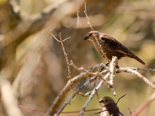 -Unknown Bird.jpg_20130524.jpg