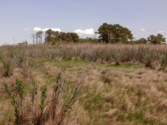 All that remains of Pigeon House, or Bethel, in Somerset County, is a clump of trees and a graveyard in the marsh.