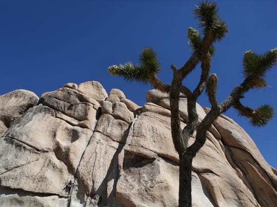 A climber makes her way up a boulder in Hidden Valley in Joshua Tree National Park.