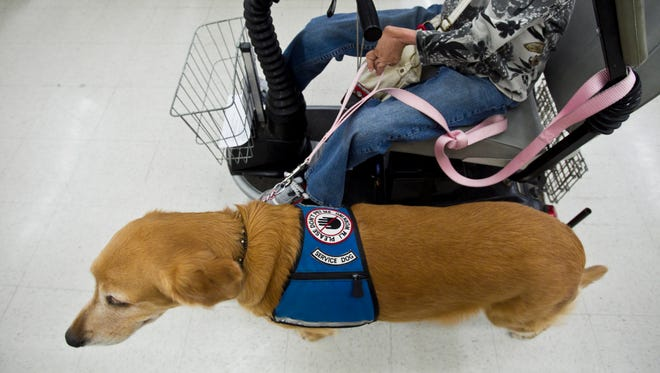 A golden retriever trains with the American Service Animal Society in Mesa in 2010.