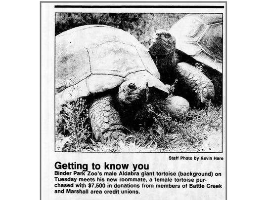 In this 1989 photo, Aldabra giant tortoises Al (back)