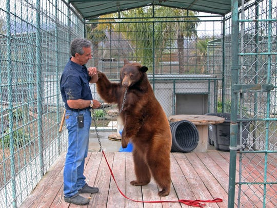 Charlie Sammut, director of the Monterey Zoo, stands with Martha, an American black bear