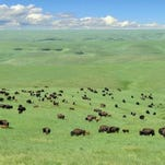 A real estate listing shows this image of Triple U Buffalo Ranch