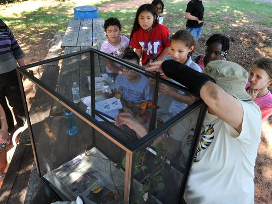 Kids from Camp Fire North Texas had an opportunity to learn about Monarch Butterflies in this file photo.