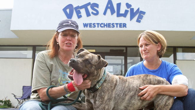 From left, Pets Alive volunteer Leslie Zee and Executive Director Erin Guilshan with a dog named Dax at the Elmsford shelter on Saturday.