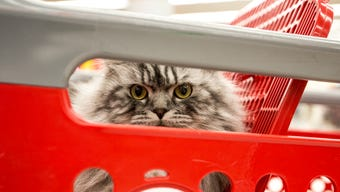 Kathleen Hansen, who owns Moses, a 1-year-old British Longhair, talks about why she chose Moses, who is featured in a new Target ad, February 22, 2018 in Marshfield, Wis.