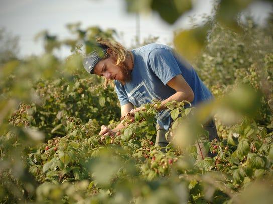 Fellenz Family Farms, a certified organic farm in Phelps,