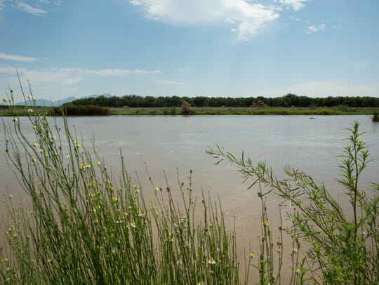 The Mesilla Valley Bosque State Park, takes visitors to the banks of the Rio Grande river along the Resaca trail. Friday Aug. 4, 2017. The park may soon be transferring management to the New Mexico Department of Game and Fish.
