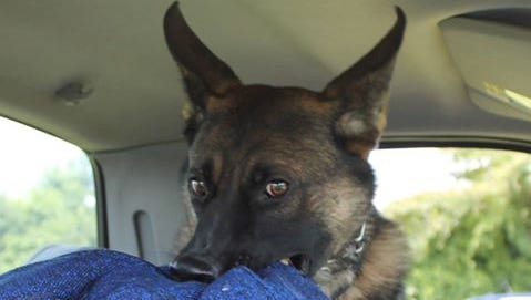 Brody, a Evesham Police Department K9