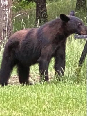 The Ohatchee Police Department posted this photo of a bear -- spotted Friday in Ohatchee -- and asked people not to feed, shoot or go near it if they see it.