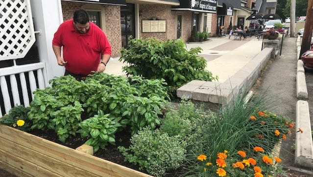 Frank Agostini, executive chef at E.G. Nick's in Plymouth, tends to the basil in one of the Plymouth restaurant's gardens.