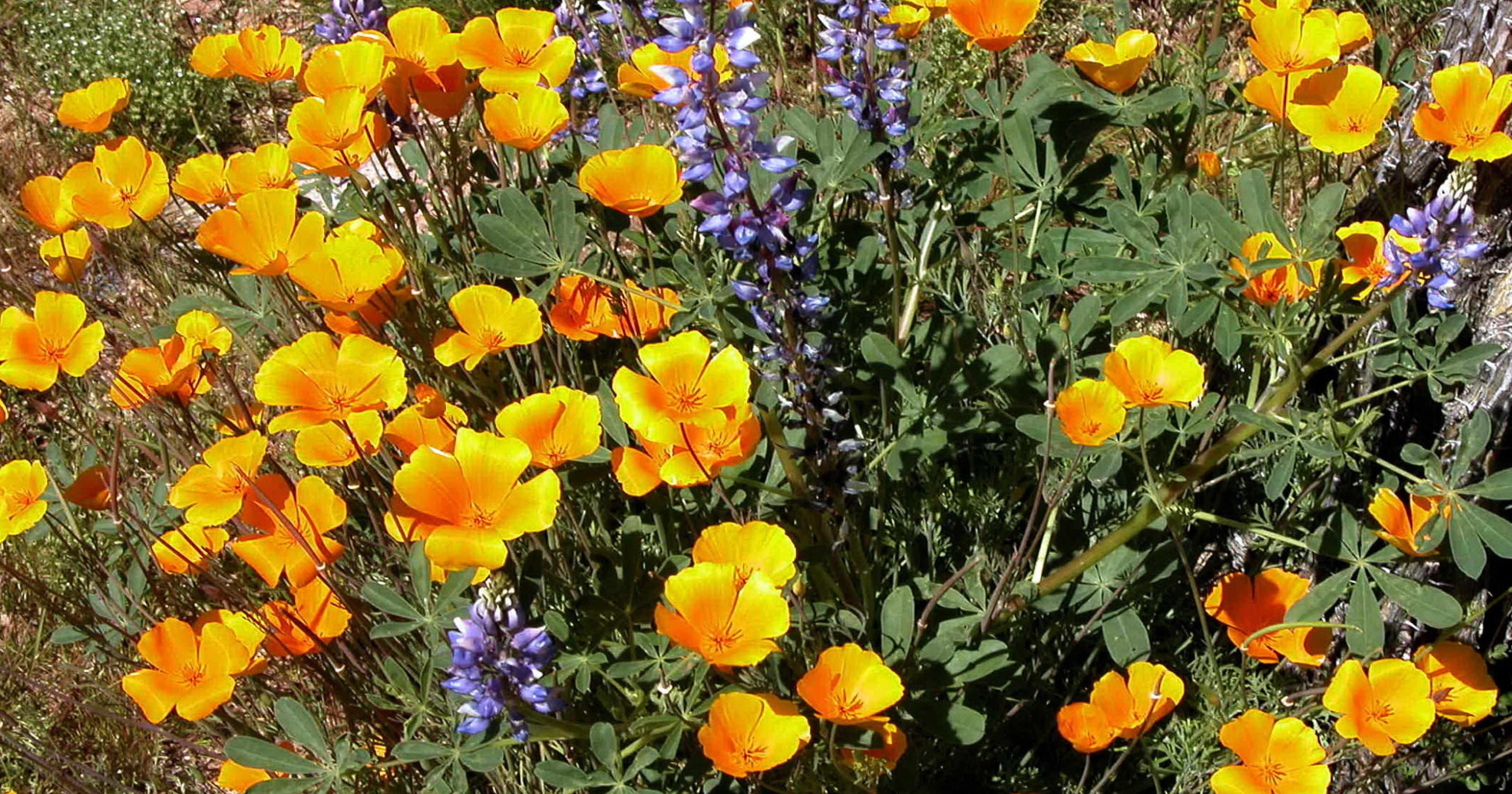 Plant Seeds Now For Spring Wildflowers