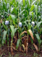 Jim Krzywiecki's family created 'Children of the Corn'