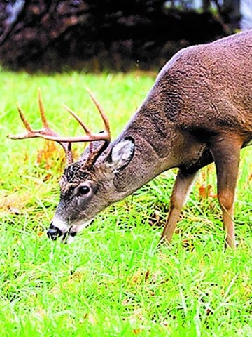 The deer harvest for 2017-18 was below the past 10-year