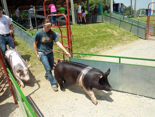 Creigh Rourke of Iowa City takes her hog back to its pen at the Johnson County Fair on Tuesday, July 22, 2014. David Scrivner / Iowa City Press-Citizen
