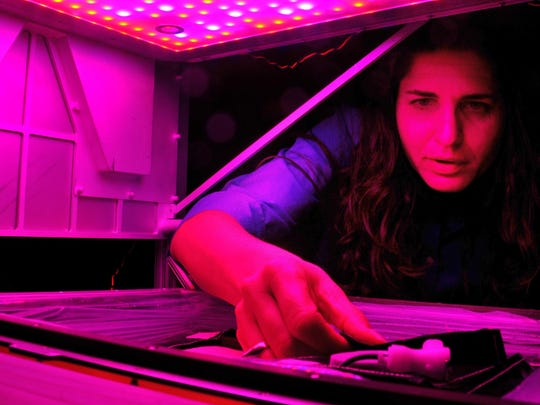 Gioia Massa, NASA project scientist, works with the Veggie gardening system in 2015 at Kennedy Space Center.