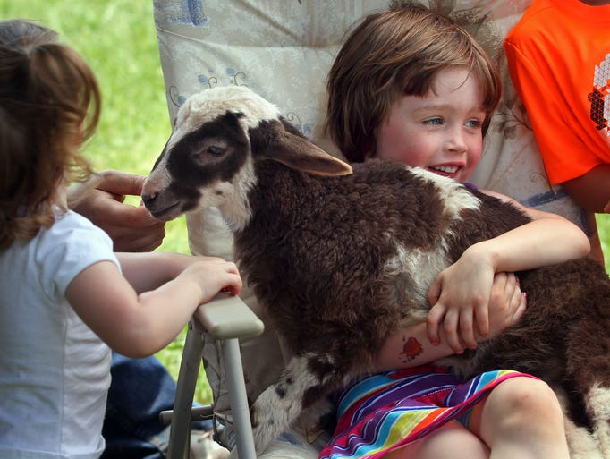 Elizabeth Dorman,5, gets to hold a three week old sheep during the event. At left is her sister Madison,2. Their mother Joy Dorman is a fifth grade teacher at the school. This is the Hillside Intermediate School's Roots & Shoots program and the 19th anniversary of the backyard meadows & trails annual Forest Fest event. Many groups and booths were open for visitors inside and outside the school, June 07, 2014. Bridgewater NJ. photo by Kathy Johnson  BRI 0608 Roots & Shoots at Hillside School