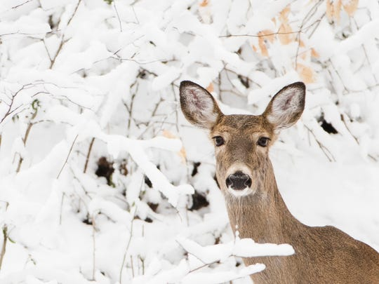 A deer stand on a hill newly covered in snow at the