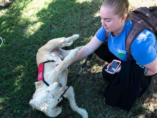 Faulkner Welness Service Dogs
