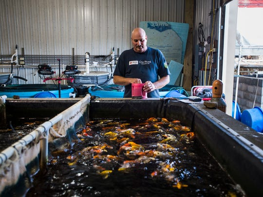 John Fornaro, owner of Hanover Koi Farms, feeds koi fish Thursday Oct. 22, 2015 at Hanover Koi Farm. Fornaro has owned the koi fish business in Hanover for 15 years where he breeds and sells koi fish.