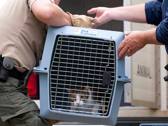 A cat is loaded into a car from Nancy Bischof's cat