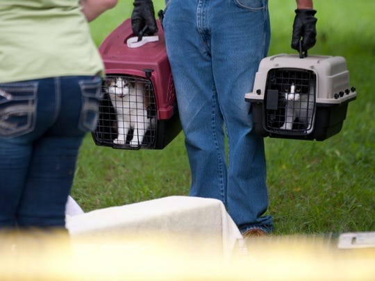 Cats being removed from Nancy Bischof's cat sanctuary between Perry and Laingsburg in August.
