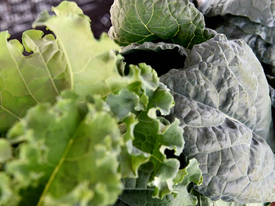 Varieties of kale available from Zavels Family Farm