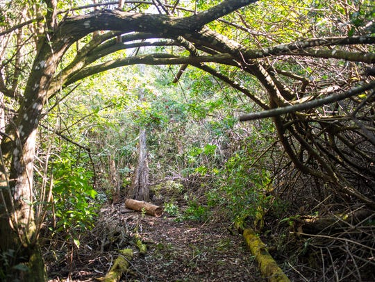 Part of a trail is seen on the property of the late Robert Gore in Naples, Fla., on Sunday, Feb. 26, 2017.