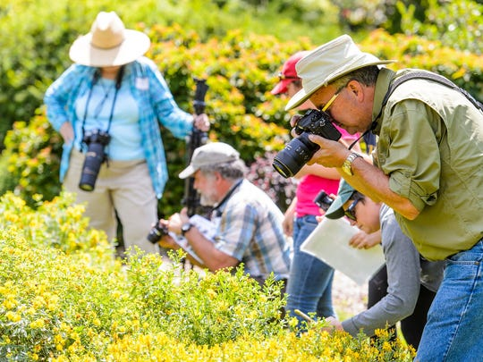 Participants take photos of bees during a bumble bee