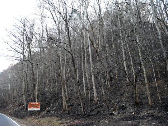 Fire damage along The Spur in Gatlinburg after wildfires