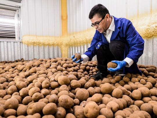 Equipment operator and staff member Sam Perez collects a sample of potatoes from cold-bin storage as he prepares to conduct biweekly, quality-control lab tests on a variety of chipping potatoes at the University of Wisconsin-Madison Hancock Agricultural Research Station (HARS) in Hancock, Wis., on April 6, 2017. HARS provides bulk-food storage and laboratory-testing services to a number of small- to medium-sized farm customers in the region. Perez is one of eight recipients of a 2017 University Staff Recognition Award (USRA).