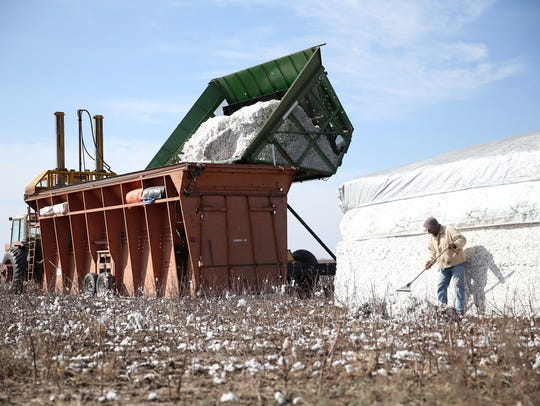 Local farmers help strip the cotton crop of Colin Klattenhoff