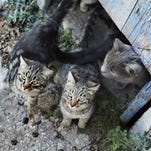 Group of stray cats