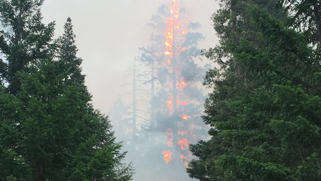 A tree burns on the Round Top Fire in Southern Oregon Tuesday, July 23.