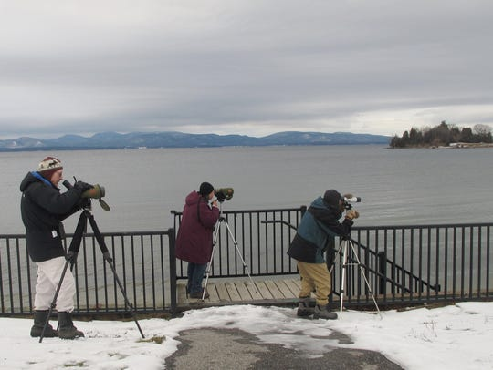 Eyes-right: Birders watch the progress of a bald eagle