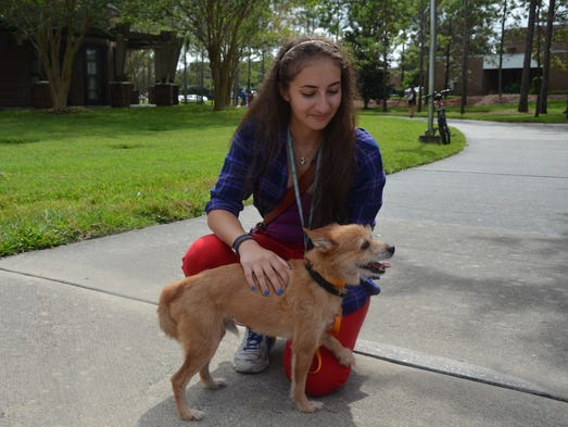 Kira Abaelow, a freshman information technology major, plays with one of the dogs, Poppy, from Rent-A-Pup.