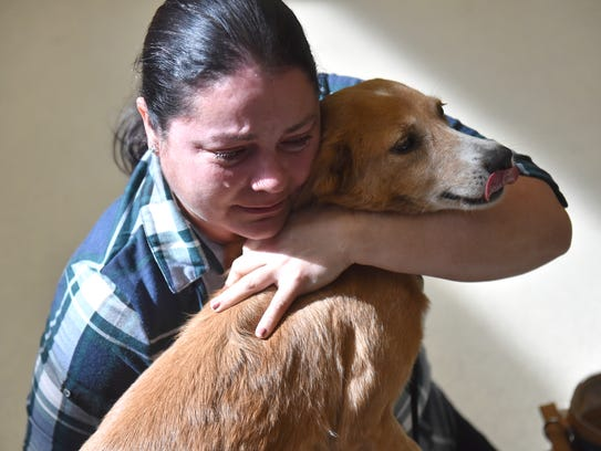 Thirty dogs from Puerto Rico are flown to Vero Beach