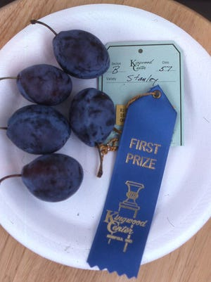 A plate of five blue Stanley plums awarded a first place blue ribbon at a recent Fall Harvest Show.