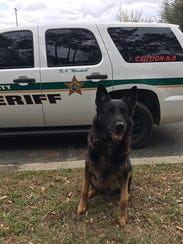 LCSO K-9 Murdock who assisted in capture of Devante
