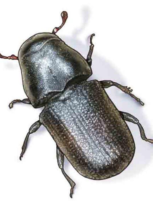 Pine beetle cutout