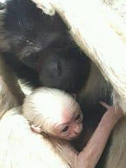 Fisher nacio en año nuevo en el Wildlife World Zoo.